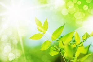 fresh new green leaves