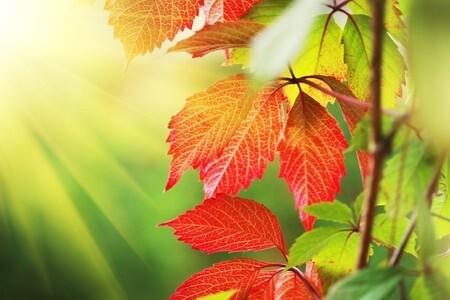 紅い葉と光