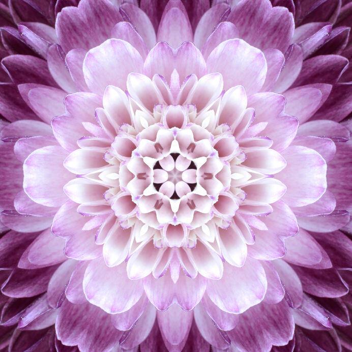 24478622 - pink concentric flower center macro close-up. mandala kaleidoscopic design