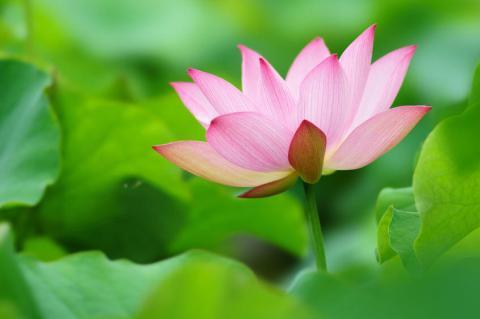 世界にたった一つの花を咲かせる
